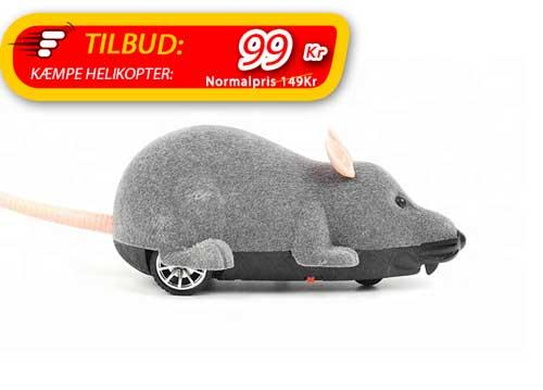 Fjernstyret mus som katten kan jagte